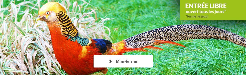 Mini-ferme : parc animalier