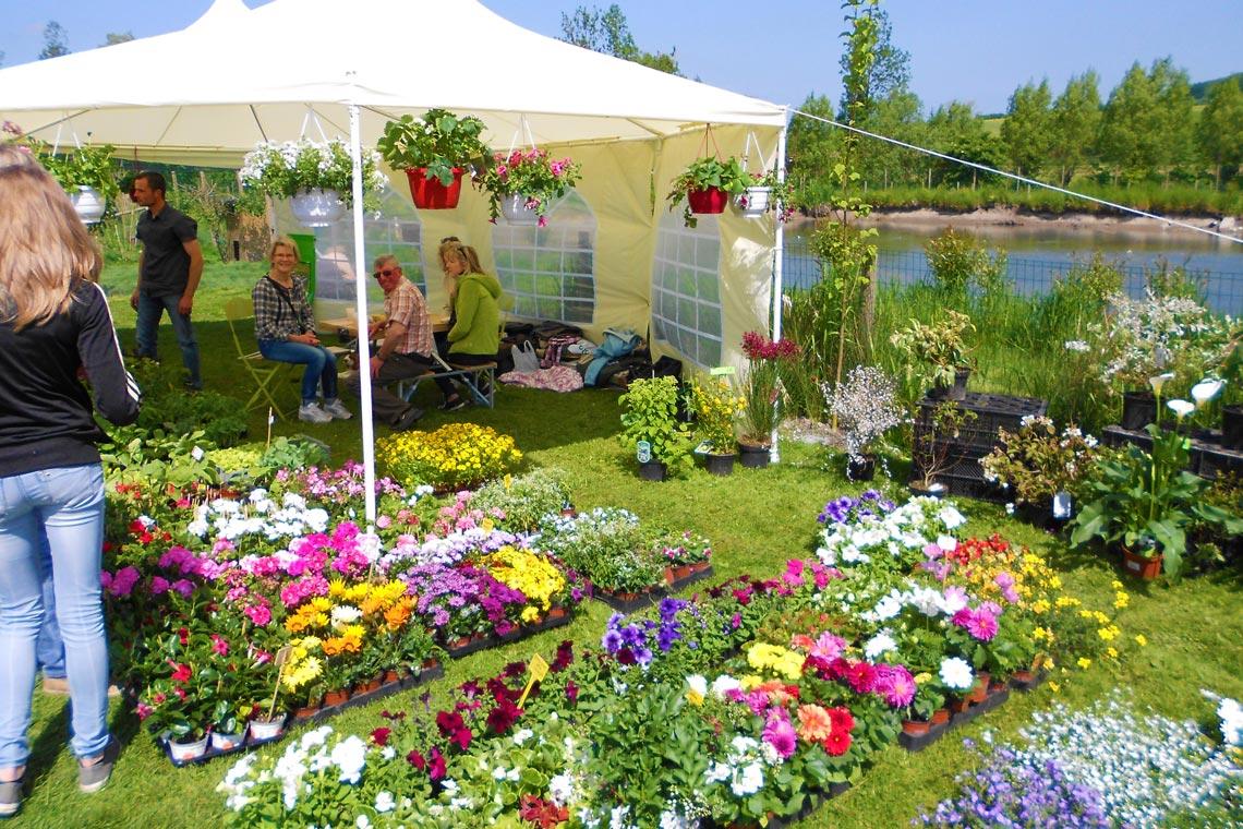 Foire aux plantes paradis aquatique for Jardin aux plantes